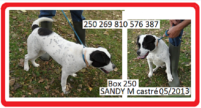 15 CHIENS-sandy.png