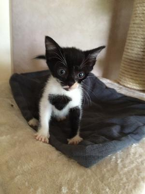 2 chatons a l adoption-img_3036.jpg