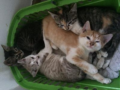 4 MAGNIFIQUES CHATONS A ADOPTER !!!-photo.jpg