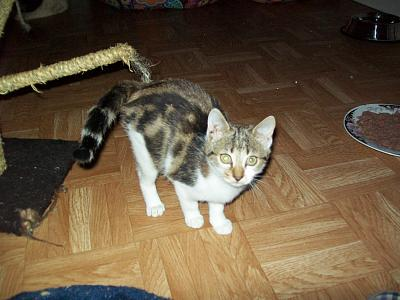 5 chatons adorables à adopter (87)-003.jpg