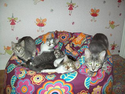 5 chatons adorables à adopter (87)-007.jpg