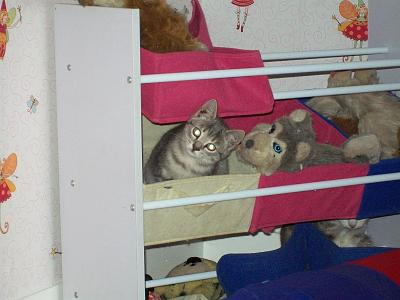 5 chatons adorables à adopter (87)-011.jpg