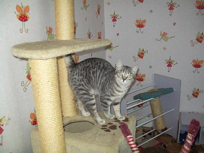 5 chatons adorables à adopter (87)-hermione.jpg