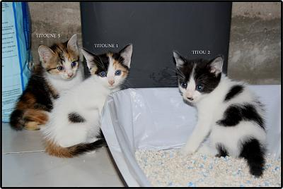 A adopter 5 chatons tricolore(34)-1-2-3.jpg