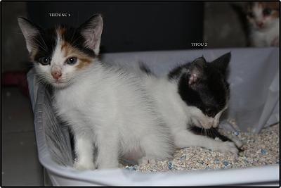 A adopter 5 chatons tricolore(34)-1-2.jpg