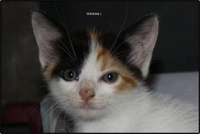 A adopter 5 chatons tricolore(34)-1.jpg