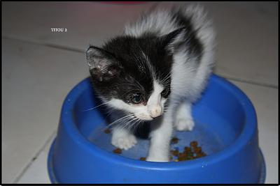 A adopter 5 chatons tricolore(34)-2.jpg