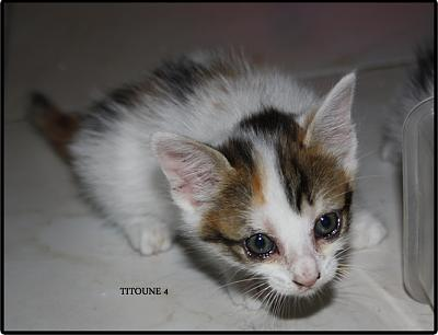 A adopter 5 chatons tricolore(34)-2b.jpg