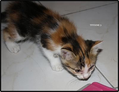 A adopter 5 chatons tricolore(34)-3.jpg
