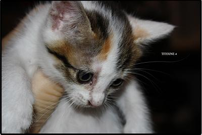 A adopter 5 chatons tricolore(34)-4.jpg