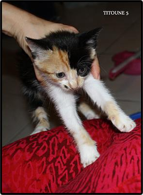 A adopter 5 chatons tricolore(34)-5.jpg