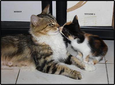 A adopter 5 chatons tricolore(34)-mum-5.jpg