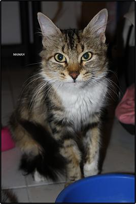 A adopter 5 chatons tricolore(34)-mum.jpg