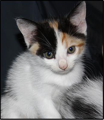 A adopter 5 chatons tricolore(34)-tit-1.jpg