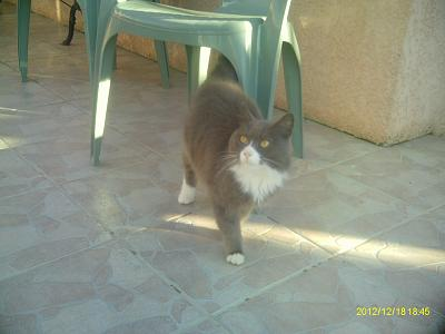 A ADOPTER CHATTE 3 ANS TATOUEE STERILISEE VACCINEE-imag0548.jpg