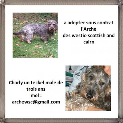 A ADOPTER CROISE TECKEL-charly.jpg