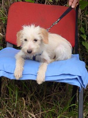 A ADOPTER ISIS FEMELLE NEE 05/2017-isis2.jpg