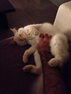 A adopter magnifique chat-image.jpg