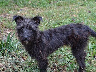 A ADOPTER SHELBY FEMELLE 4 KG Née 04/16-shelby1.jpg