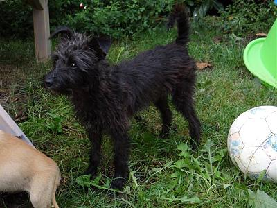 A ADOPTER SHELBY FEMELLE 4 KG Née 04/16-shelby4.jpg