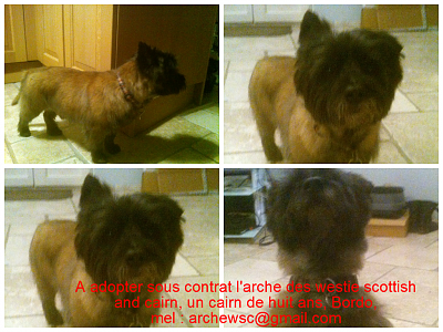 A ADOPTER UN MALE CAIRN DE HUIT ANS-presentation-bordo.png