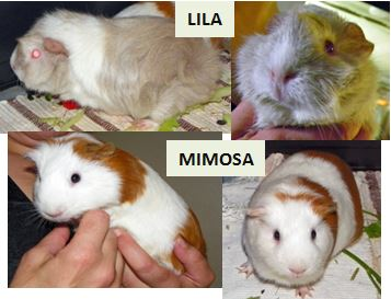 Nom : Lila et Mimosa.JPG