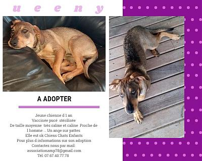 Adoption chienne Yvelines QUEENY-photo-queeny.jpg
