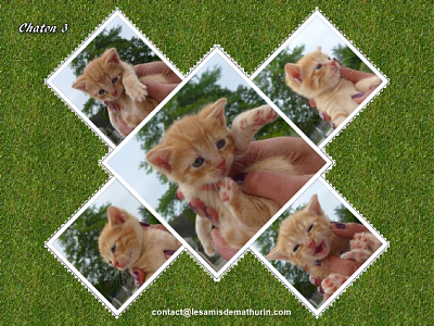 ** AENOR et ses 4 chatons **-chaton-03.png