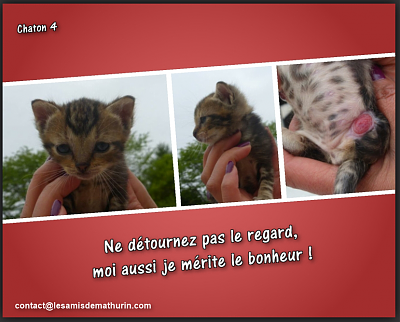 ** AENOR et ses 4 chatons **-chaton-04.png
