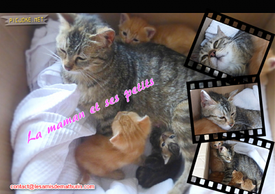 ** AENOR et ses 4 chatons **-maman-01.png