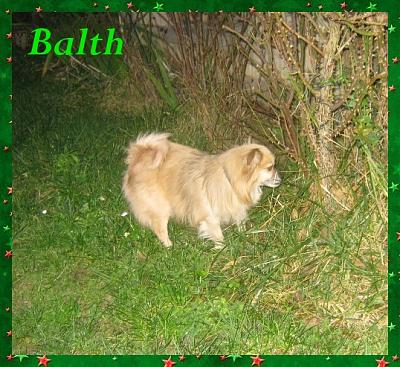 BALTH  chien type Spitz Non Lof (91)-balth01.jpg