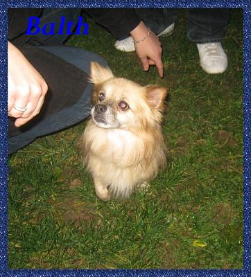 BALTH  chien type Spitz Non Lof (91)-balth07.jpg