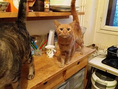 BB ROMEO, chat roux attend sa famille : PARIS / RP-20171119_080339.jpg