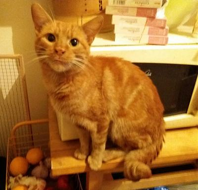 BB ROMEO, chat roux attend sa famille : PARIS / RP-20171119_082053.jpg
