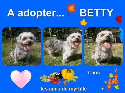Betty croisée caniche de 7 ans à adopter sous contrat aux amis de myrtille-montage-betty-adoption.jpg