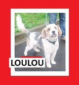 Nom : LOULOU.PNG