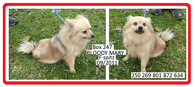 Box 247 BLOODY MARY  F spitz-z-bloody.png