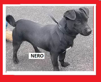 Nom : NERO.PNG
