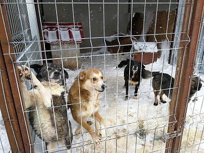 CANDY - CHIENNE CROISEE DE 4 ANS - TRES CALINE - REFUGE ALINA-29541712_1704399276287145_3345889073112824631_n.jpg