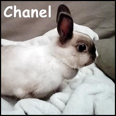 Chanel, craquante lapine - Lyon (69)-photo-facebook.jpg