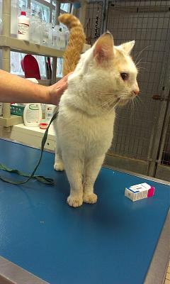 Chat male 1.5 ans, pb oeil suite AVP, FOURRIERE IMMINENTE [94]-imag3785-1-.jpg