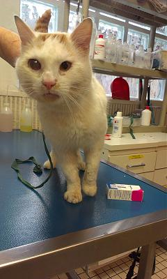 Chat male 1.5 ans, pb oeil suite AVP, FOURRIERE IMMINENTE [94]-imag3786-1-.jpg