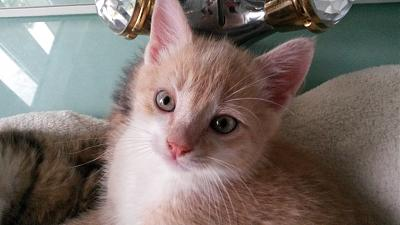 chatons a adopter 57...JASON-dossier-6-018.jpg