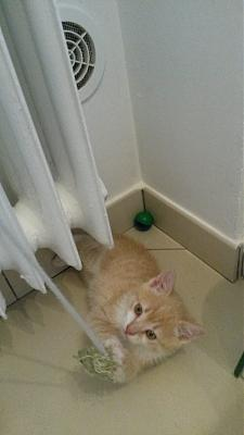 chatons a adopter 57...JASON-dossier-6-020.jpg