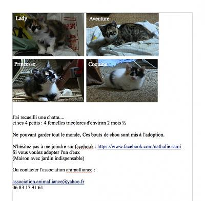 Chatons Femelles tricolores-annonce-jpg.jpg
