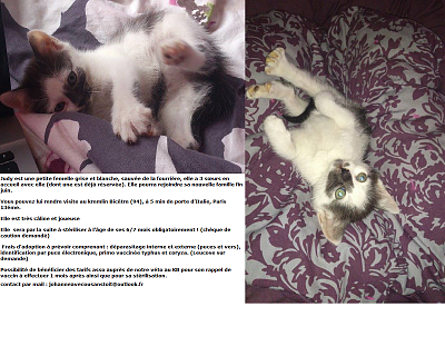 NOS CHATONS A L'ADOPTION (94/93)-fichejudy.png