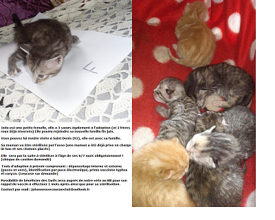 NOS CHATONS A L'ADOPTION (94/93)-jadafiche.png