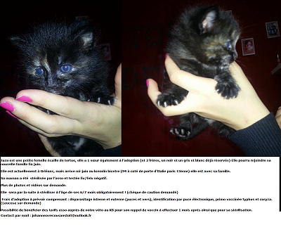 NOS CHATONS A L'ADOPTION (94/93)-jaza-fiche.png