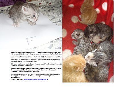 NOS CHATONS A L'ADOPTION (94/93)-jennyfiche.png