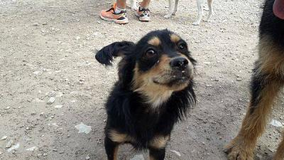 Coconut adorable loulou sociable 1 an 5 kgs attend au refuge (Jaen, Espagne)-coconut6.jpg
